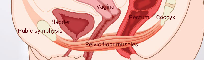 Pelvic Floor Dysfunction